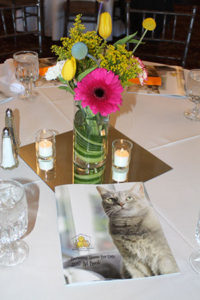 annual dinner for cats