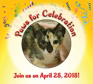 fundraiser for chicago cats